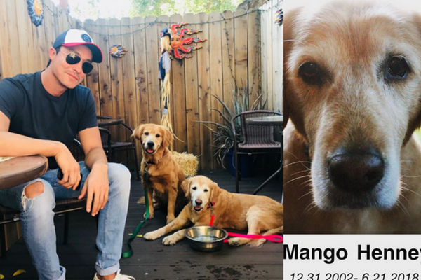 Daniel Henney Honors the Passing of His Companion and Pet Mango
